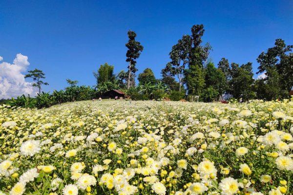 flower field in chiangmai