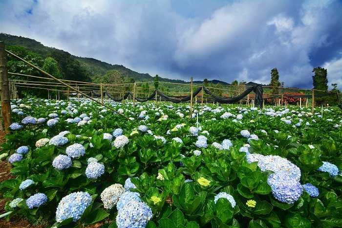 Flower fields Chiang Mai flower gardens